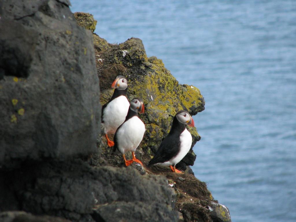 Voyage en Islande du 10 au 25 août 2012
